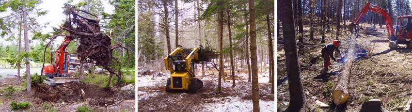 pre-construction land and forest clearing